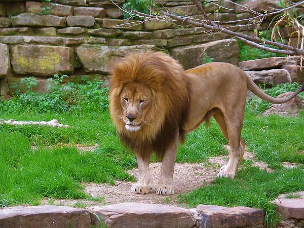 Ft Worth Zoo